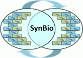 Fundamentals for synthetic biological systems